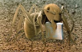 An ant holding a microchip