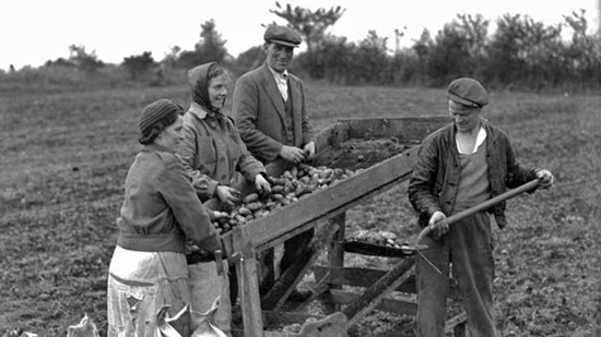 Potato farmers