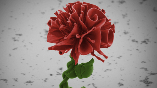 Microscopic flower the size of a human hair