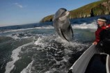 Dolphin greets boater