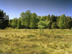 Can you spot the military sniper hidden in the landscape?