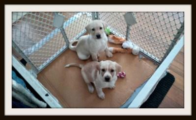POD: Puppies