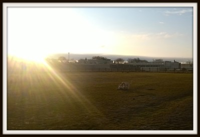 POD: Evening at the Dog Park