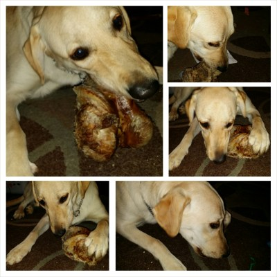 POD: Rubys new bone