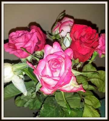 POD: Surprise Flowers