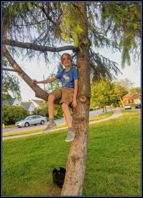 POD: Jacob in a Tree