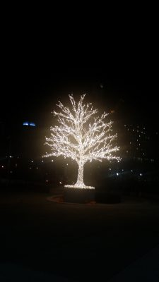 POD:  Tree of Lights from the past