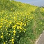 春はお世話になった人を想う季節:ご馳走になった千円のポークソテーに涙する。