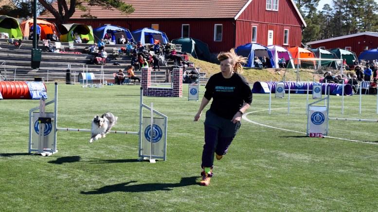 FULLT FOKUS: Siw Hornli Espeland fører an og hunden hennes hopper, spretter seg gjennom hinderløypa på Hove kunstgressbane. Foto: Esben Holm Eskelund