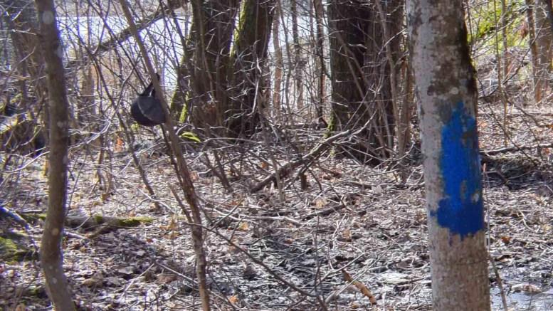 BLÅMERKET: Grunneiere reagerer på omfattende merking med blå maling på trær, fjell og steiner rundt Gjerstadvannet. Dette er et foto fra tidligere i år. Nylig har det blitt merket på nytt. Foto: Esben Holm Eskelund