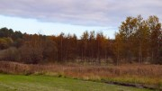 FOR DYRT: Rådmannen i Arendal mener kjøpere har vært for rause med selgerne da et jordbruksareal ved Skottjenn ble kjøpt i 2016. Nå vil rådmannen nekte å gi konsesjon for kjøpet. Foto: Esben Holm Eskelund