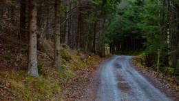 TJENNDALEN: Veien som leder til tjernet Tjenna. Foto: Esben Holm Eskelund