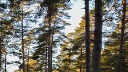 LUFTIGE PLANER: Smittevernoverlegen i Arendal, Preben Aavitsland, har flere innspill til reguleringsplanen for Canvas Hove, og ber om svar på flere forhold knyttet til miljørettet helsevern. Foto: Esben Holm Eskelund