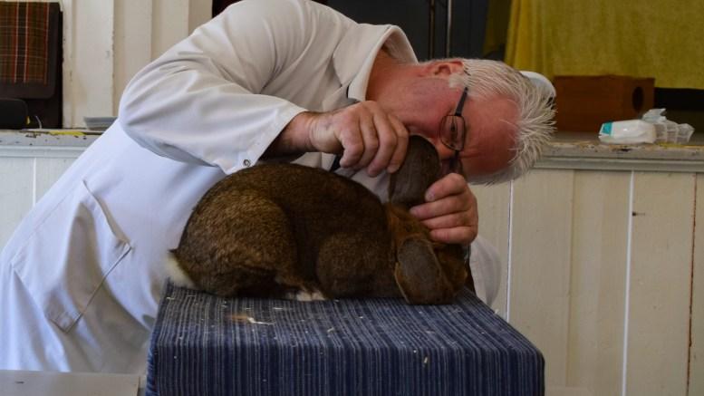 KANINUTSTILLING: Alt sjekkes av kanindommerne under utstillingen Sørlandet kaninavlslag hadde på Hove i palmehelgen. Foto: Esben Holm Eskelund