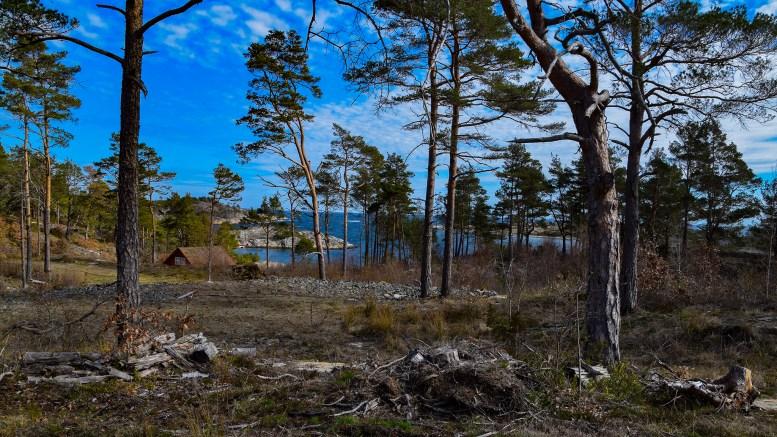 UKENS STED: Motteberget i Skarestrand. Foto: Esben Holm Eskelund