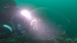 FLYTENDE LOTTOGEVINST: Dykkere fra Arendal Undervannsklubb gjorde særdeles uvanlig funn i havnet ved Møkkalasset fyr, utenfor Kilsund denne uken. Foto: Geir Eliassen