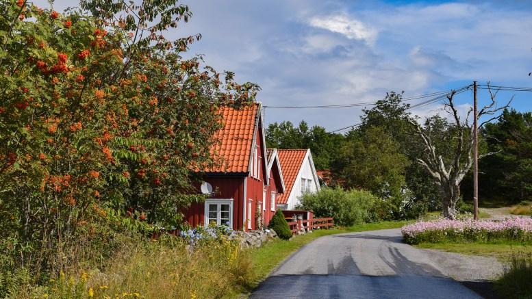 DÅRLIG TRE: Treet ved strømstolpen langs Spornesveien bør fjernes, mener beboer. Foto: Esben Holm Eskelund
