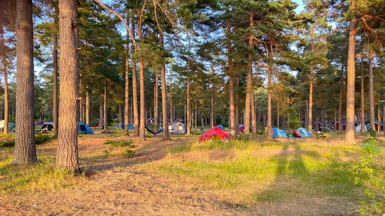 TRE ØNSKER: Ap-nestleder Nina Jentoft beskriver naturcamp-modellen for camping på Hove, som partiet fikk flertall for i mars i fjor, som et kinderegg for kommunen. Foto: Esben Holm Eskelund