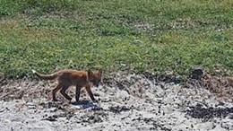 UVANLIG SYN: Ikke et helt forventet dyr på øya utenfor Tromøy. Foto: May Lene Østhassel Gundersen