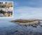 SPEKTAKULÆR SCENE: ProjectD går i land på rullesteinøya øst for Tromøy for å holde webkonsert. Foto: Privat / Raet nasjonalpark/ Øystein Paulsen