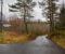 PRIVATE VEIER: Arendal kommune ønsker å kvitte seg med flere kommunale veier for å spare penger. Det kan bety at det kan bli enda flere veier som Sandåveien, hvor innbyggerne langs veien selv må koste vedlikehold og drift. Foto: Esben Holm Eskelund