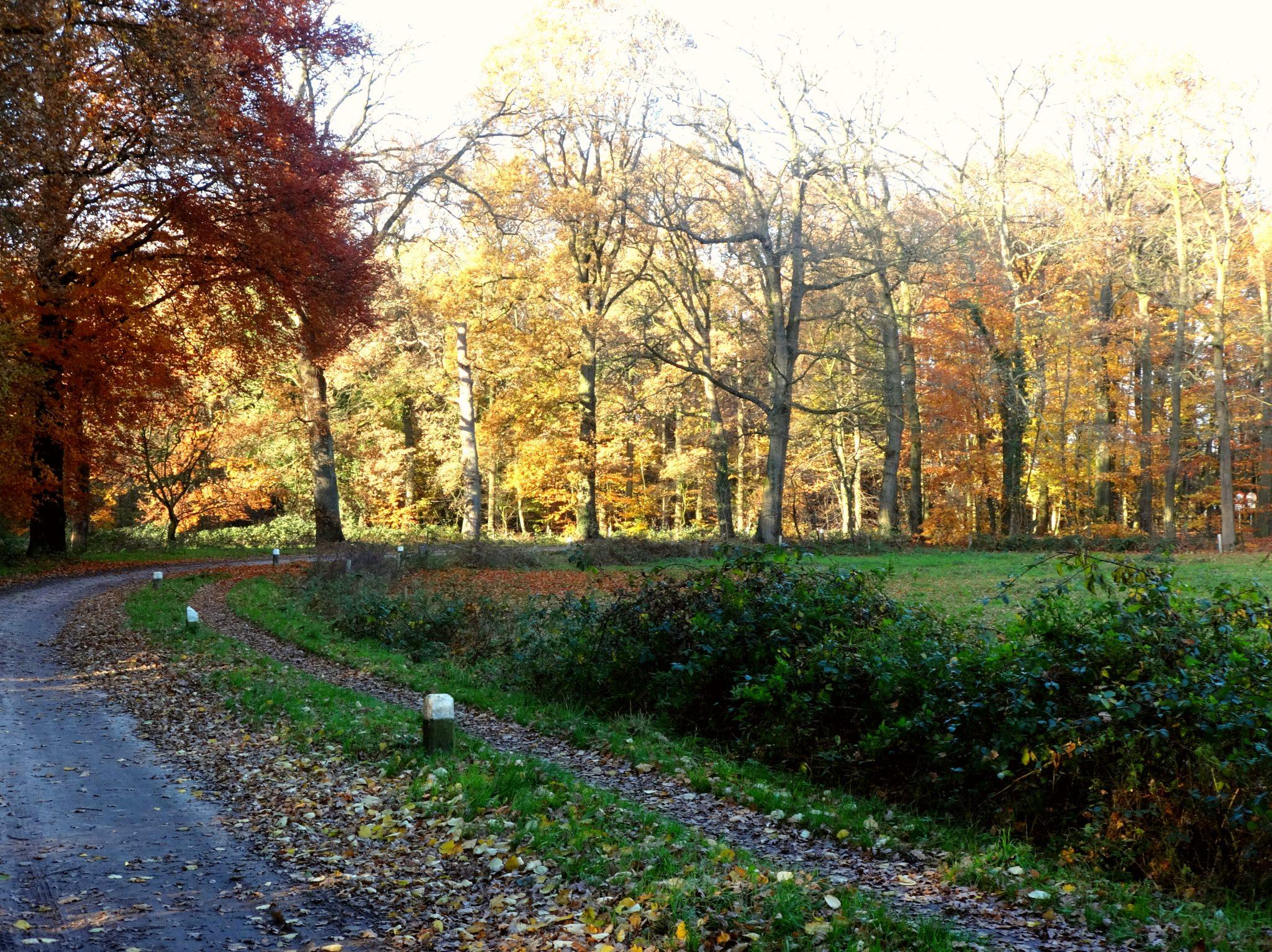 Achter het huisje loop je zo het bos in…