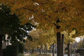 Herfst in de Coevering