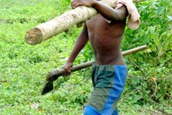 Fórum quer ensino integral para erradicação do trabalho infantil