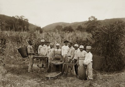 "Enlargement of ""Slaves in the coffee harvest, Rio de Janeiro, Brazil"