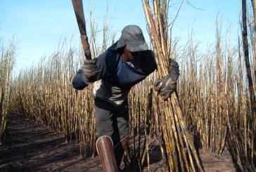 Confira as consequências para os empregadores que exploram o trabalho escravo