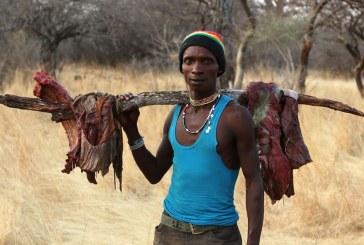 Os segredos da boa saúde de uma tribo que se alimenta da mesma forma há 40 mil anos
