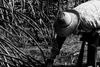 Escravidão não é só algema e açoite, diz procuradora do Trabalho