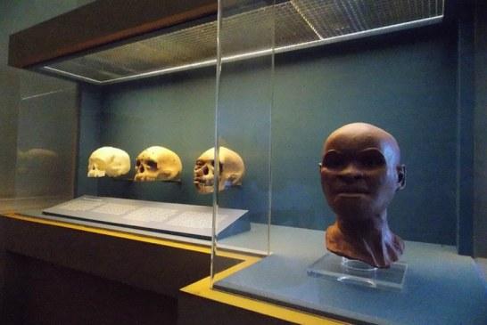 Pesquisadores vão trabalhar na reconstituição do crânio de Luzia