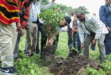 Etiópia planta 353 milhões de árvores em um dia. Como isso pode ajudar o planeta?