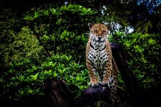 Foto de João Allbert