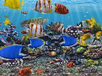 3D Fish Tank Aquarium Screensaver