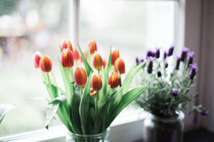 Tulips and lavender on a window ledge