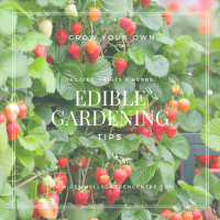 Edible Gardening Tips for Fresh Fruits, Vegetables & Herbs ...