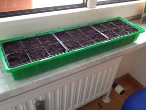 Starter-Kit Gemüse auf dem Balkon anbauen