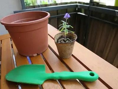 Lavendel vermehren
