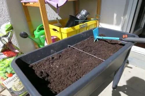 Blattsalat auf dem Balkon anbauen_1