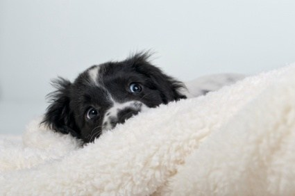 scared-dog-hiding_1