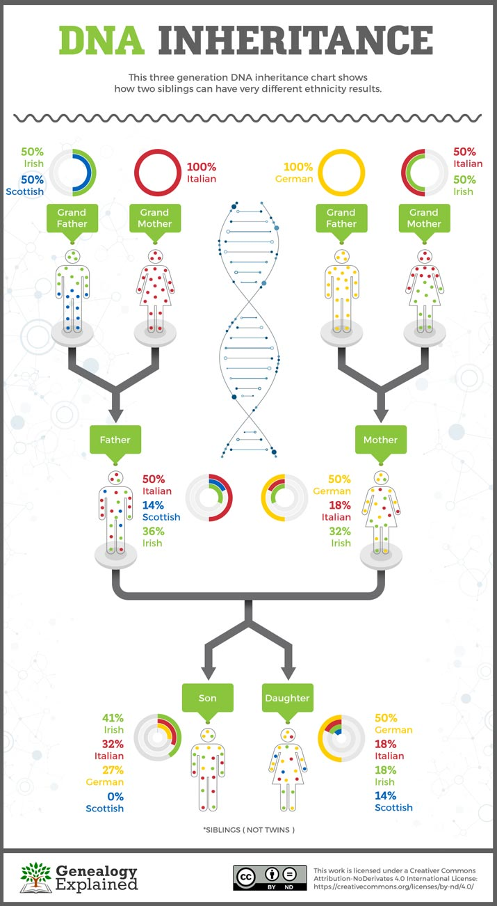 Do Siblings Have the Same DNA? [Visual Guide]