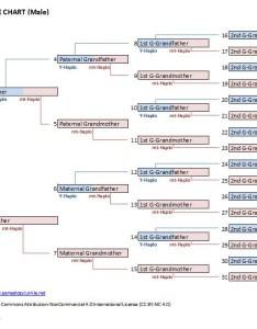 Template for  dna and mtdna haplogroup tree also blog genealogy junkie rh genealogyjunkie