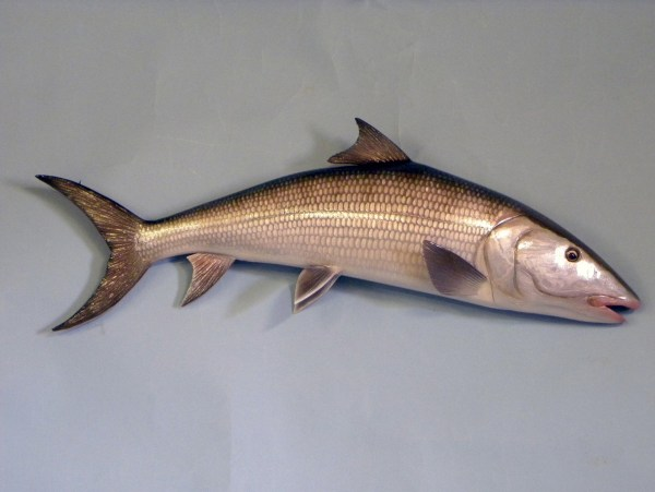 Wall mounted fish carvings year of clean water