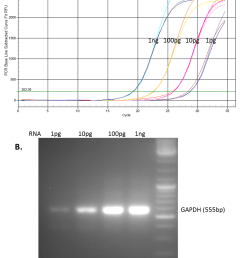 one microgram of total rna from mcf 7 cells was reverse transcribed using genecopoeia all in one cdna synthesize kit the rt reactions were diluted to  [ 876 x 1163 Pixel ]
