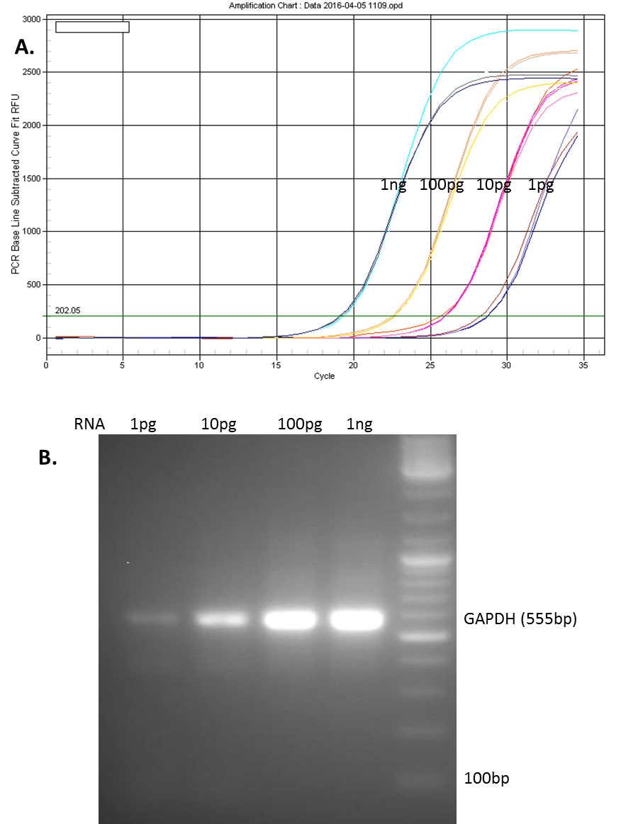 hight resolution of one microgram of total rna from mcf 7 cells was reverse transcribed using genecopoeia all in one cdna synthesize kit the rt reactions were diluted to