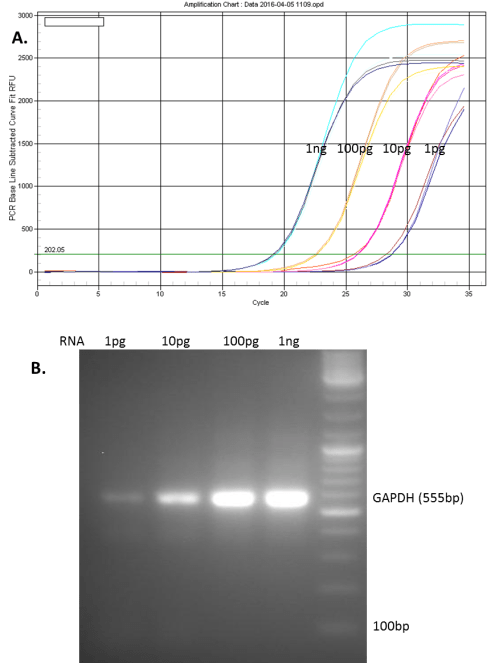 small resolution of one microgram of total rna from mcf 7 cells was reverse transcribed using genecopoeia all in one cdna synthesize kit the rt reactions were diluted to