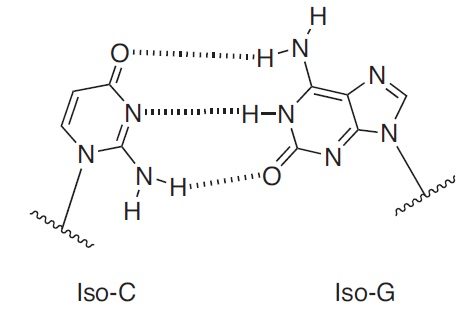 iso dG Oligo Modifications from Gene Link