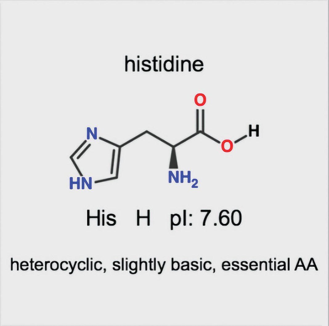 How To Memorize Amino Acids